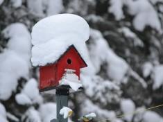 bird-house-995659_640